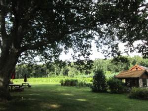 Verde Vineyards, Johnston, RI