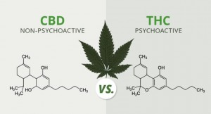 The-Subtle-Benefits-of-CBD-768x414