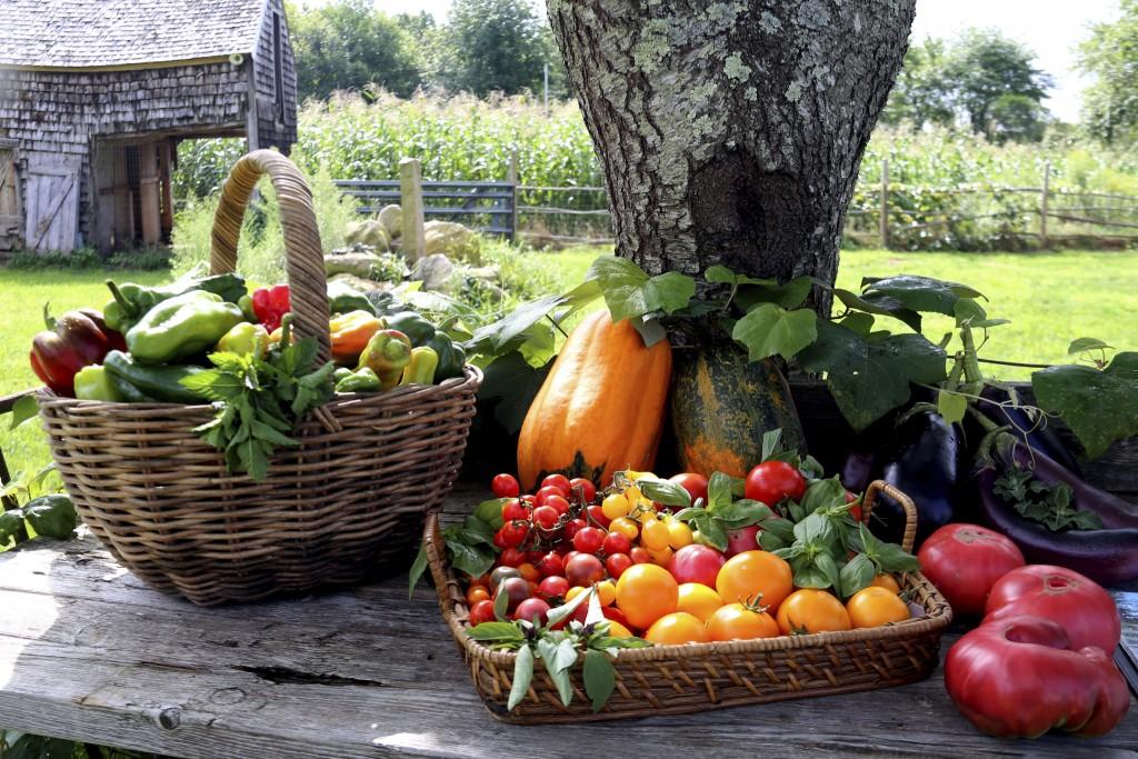 Narragansett Food Sovereignty Initiative 4